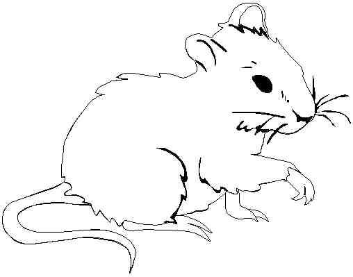 Coloriage souris page 11 - Hamster gratuit ...